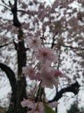 Roze bloemen bewolkte dag royalty-vrije stock afbeeldingen
