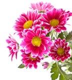 Roze bloemen in bloei stock afbeelding