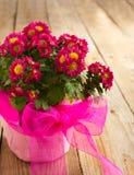 Roze Bloemen in de Pot stock fotografie