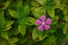 Roze bloemen die door groene bladeren worden omringd stock fotografie