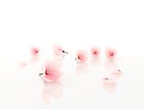 Roze bloemen die op wit worden geïsoleerdd Royalty-vrije Stock Foto