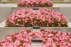 Roze bloemen en bedden, textuur, textuur royalty-vrije stock afbeelding