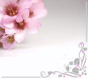 Roze bloemen en bloemillustratie Royalty-vrije Stock Afbeeldingen