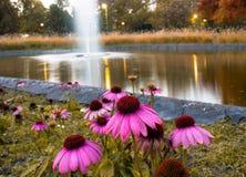 Roze bloemen en het meer Royalty-vrije Stock Foto's