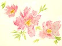 Roze bloemen geplaatst de tekening van de Waterverfhand royalty-vrije illustratie