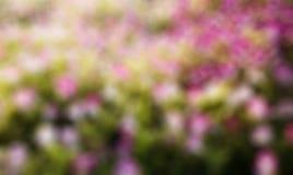 Roze bloemen, groen gazon Royalty-vrije Stock Afbeelding