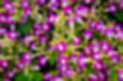 Roze bloemen, groen gazon Stock Afbeelding