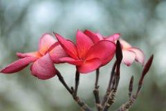 Roze bloemen, groene achtergrond, aardmiddag Stock Afbeeldingen