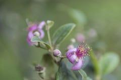 Roze bloemen in het bos Stock Fotografie