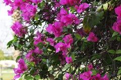Roze bloemen ingevulde installaties Stock Afbeeldingen
