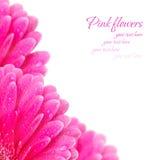 Roze bloemen met dalingen van water op een witte achtergrond Royalty-vrije Stock Foto