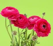 Roze bloemen met groene achtergrond Royalty-vrije Stock Foto