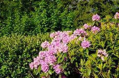 Roze bloemen op de helling stock foto's