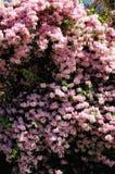 Roze bloemen op de helling stock afbeeldingen
