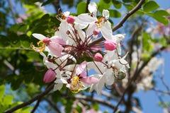 Roze bloemen op een boom Royalty-vrije Stock Afbeelding