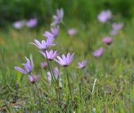 Roze bloemen op een weide van het land stock afbeeldingen