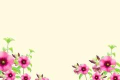 Roze bloemen op gele uitstekende ruimte als achtergrond en exemplaar Stock Afbeeldingen