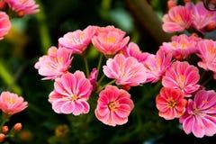 Roze bloemen op groene achtergrond royalty-vrije stock fotografie