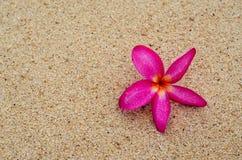 Roze bloemen op het zand royalty-vrije stock foto