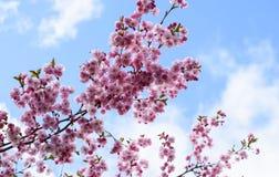 Roze bloemen op rododendron royalty-vrije stock fotografie