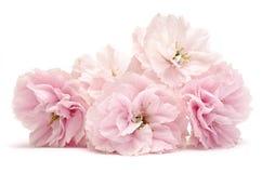 Roze bloemen op wit royalty-vrije stock foto