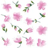 Roze bloemen op wit. Royalty-vrije Stock Foto's