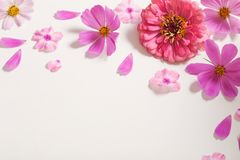Roze bloemen op witte achtergrond Stock Foto's