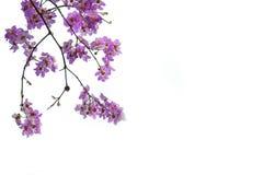 Roze bloemen op witte achtergrond Stock Afbeeldingen