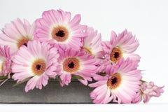 Roze bloemen op witte achtergrond Royalty-vrije Stock Foto