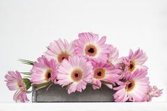 Roze bloemen op witte achtergrond Stock Foto