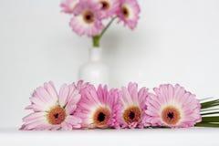 Roze bloemen op witte achtergrond Royalty-vrije Stock Fotografie