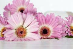 Roze bloemen op witte achtergrond Royalty-vrije Stock Foto's