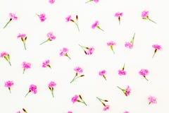 Roze bloemen op witte achtergrond Vlak leg, hoogste mening Bloemtextuur Royalty-vrije Stock Fotografie