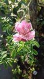 Roze bloemen regenachtige bloesems royalty-vrije stock afbeeldingen
