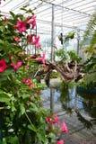 Roze bloemen in Serre Royalty-vrije Stock Afbeelding
