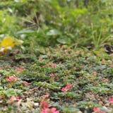 Roze bloemen willekeurige schoten stock afbeelding