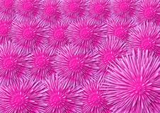 Roze bloemenachtergrond Royalty-vrije Stock Foto's