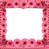Roze bloemenkader van gerberas Royalty-vrije Stock Afbeeldingen