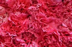 Roze bloementextuur Stock Foto