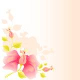 Roze bloemenvector Stock Foto
