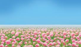 Roze Bloemgebied Stock Afbeeldingen