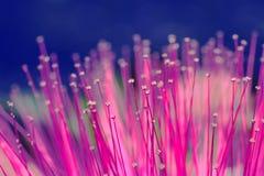 Roze bloemhoofd in macro royalty-vrije stock afbeeldingen