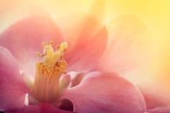 Roze bloemmacro royalty-vrije stock foto