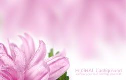 Roze bloemprentbriefkaar Stock Afbeeldingen