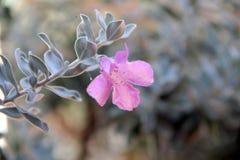 Roze bloemtuin met vage achtergrond royalty-vrije stock afbeeldingen