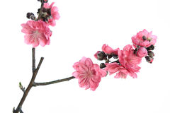 Roze bloesems Stock Afbeelding