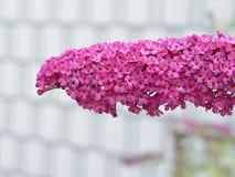 Roze bos kleine bloem Royalty-vrije Stock Foto's