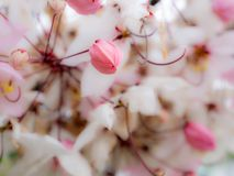 Roze Bud Wishing Tree rond de Bloem stock foto's