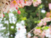 Roze Bud Wishing Tree rond de Bloem stock afbeeldingen