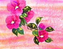 Roze camelia Stock Fotografie